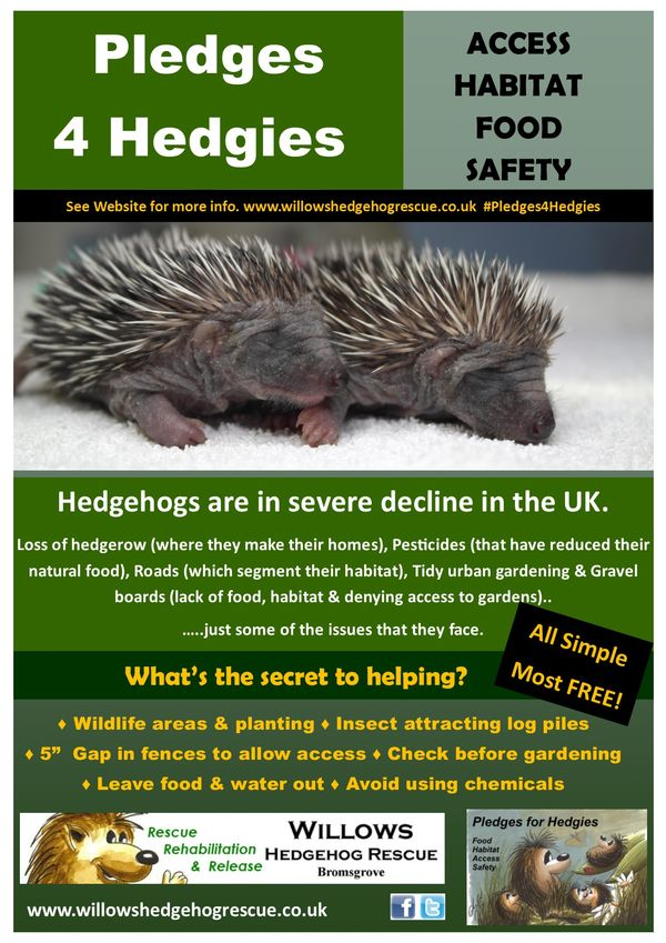 Pledges4HedgiesPoster