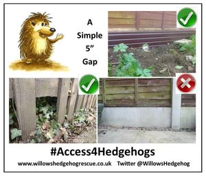 #Access4Hedgehogs
