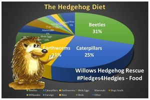 Pledges4HedgiesFood